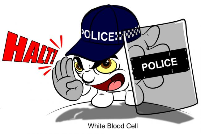 [image] a white blood cell