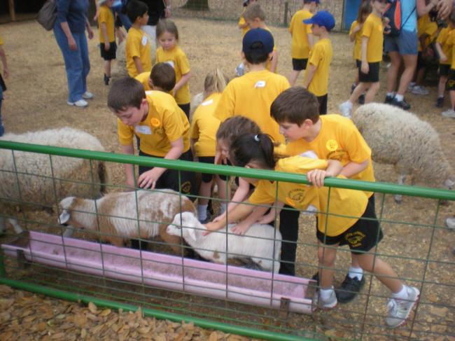 [image] Ms Kniepmanns class petting animals
