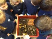 Recycling with red worms in Preschool